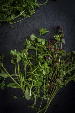Wild herbs on slate board. Top view