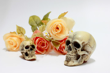 Still life photography with a human skull and branch of flower isolated on white background. happy halloween day.