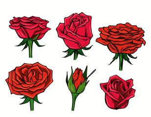 vector red beautiful roses