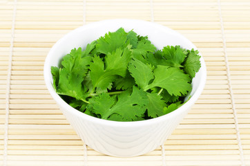 Fresh coriander leaves, also known as cilantro, Chinese parsley and dhania, in a white porcelain bowl on white background. Green Coriandrum sativum, an edible herb. Isolated macro food photo close up.