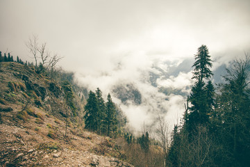 Coniferous Forest with cloudy Mountains Caucasus beautiful landscape moody weather colors