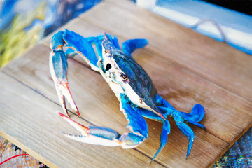 Painted Blue Crab From Maryland USA