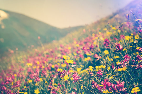Blooming Flowers in mountains valley alpine Spring Summer seasons natural Background trendy colors