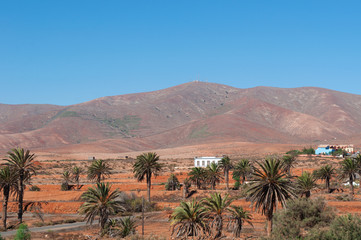 Fuerteventura, Isole Canarie: il paesaggio marziano dell'isola con le montagne e le palme il 31 agosto 2016