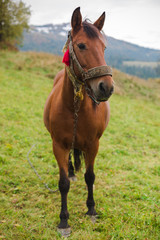 Horse in a pasture in the mountains