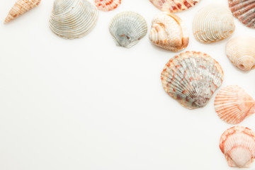 Seashells for use as a background with room for text.