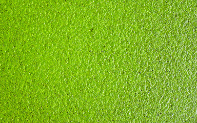 abstract nature background with green leaves