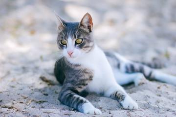 cat sit