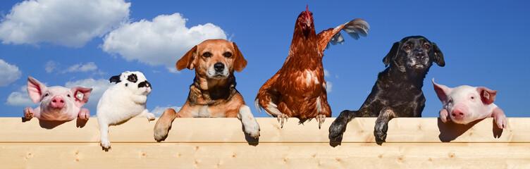 Lustige Haustiere hängen auf einem Bretterzaun, Banner