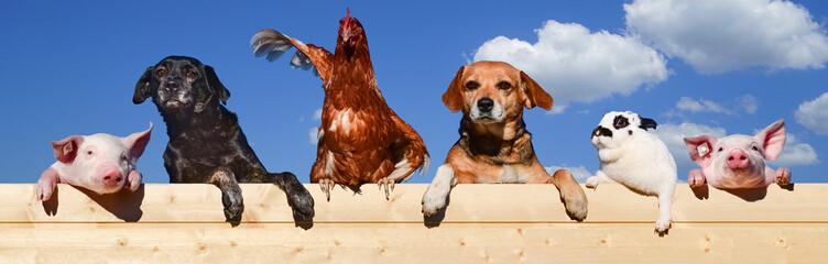 Gruppe von Haustieren schaut über eine Bretterwand, Banner