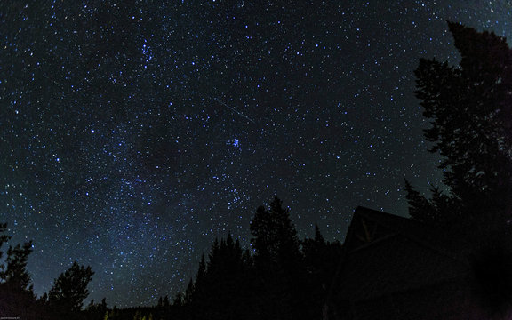 Stars and Pines
