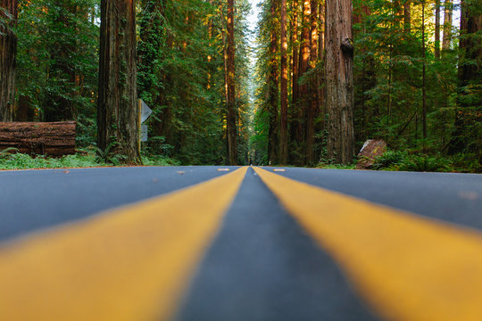 The Road | Avenue of Giants