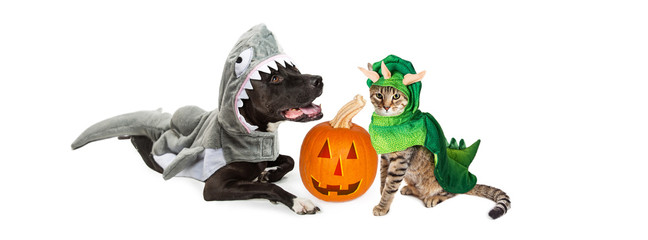 Cute cat and dog wearing halloween costumes with a jack-o-lantern pumpkin.