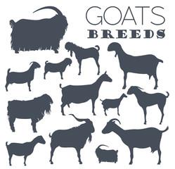 Goat breeds icon set. Animal farming. Flat design