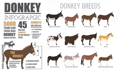 donkey breeds infographic template animal farming flat design