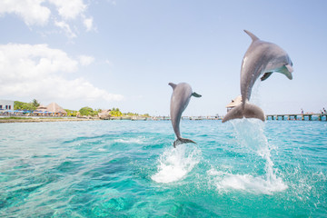 Two dolphins jumping from the ocean