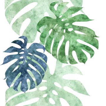 monstera leaves illustration border