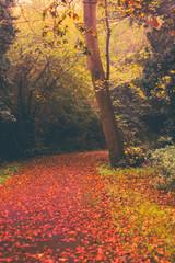 Autumn in Goldsworth Park in Woking