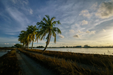 Panoramic view of paddy view during evening and sunset