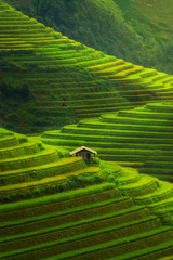 Papiers peints Les champs de riz Terraced rice field in Mu Cang Chai, Vietnam