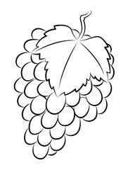 hand draw grape, vector