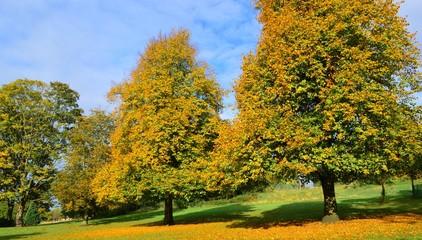 A Colourful Autumn Landscape.