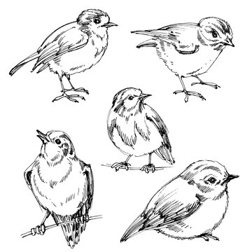 Birds set. Hand drawn cute birds, black outlines for coloring