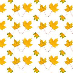 pattern maple leaf yellow  autumn