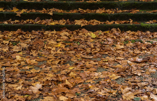 Alfombra de hojas secas con escalera al fondo stock - Alfombras para escaleras ...