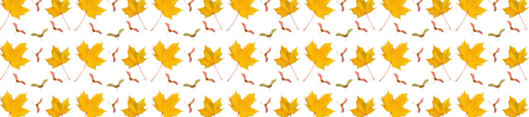 Wall Mural -  panorama  pattern maple leaf yellow  autumn