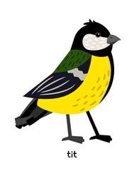 Image of nice Tit Bird