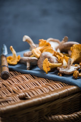 Raw wild mushrooms from forest