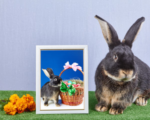 Big bunny sitting near a photo with the bunny and Easter basket