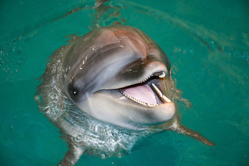 smiling dolphin in turquoise water