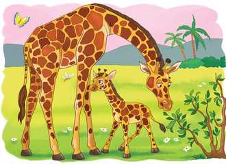 The zoo. Animals of Africa. Giraffes. Cute mother giraffe and her baby. Illustration for children. Coloring book. Coloring page. Cartoon characters.
