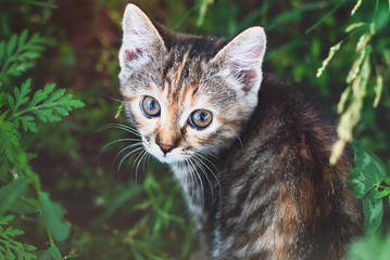 Sute Striped Kitten in the Green Grass Outdoors - Playing Cat - Pets Care Concept