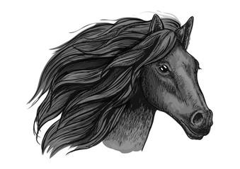 Black raven stallion running against wind