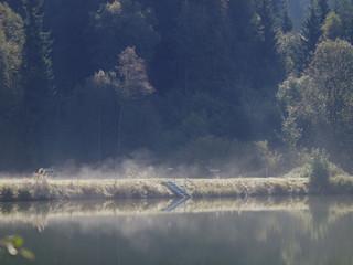 Nebelschwaden über Badesee