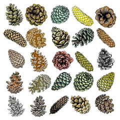 Set of watercolor painted and hand drawn inked drawing of pine cones. Collection of Christmas hand drawn fir cones. Cones of various trees cedars, firs, hemlocks, larches, pines and spruces.