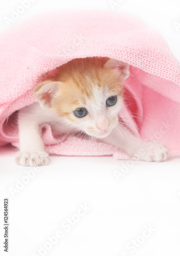 quot cute baby kitten wrapped in pink blanketquot stockfotos und