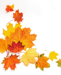 Bright autumn leaves of maple and sycamore on a white background. Frame. Blank.