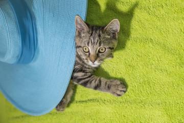 Kitten hiding under big blue summer hat