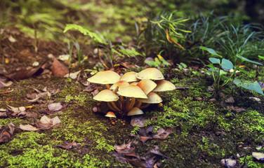 Mushrooms growing in the ground. Autumn in Batumi Botanical Garden