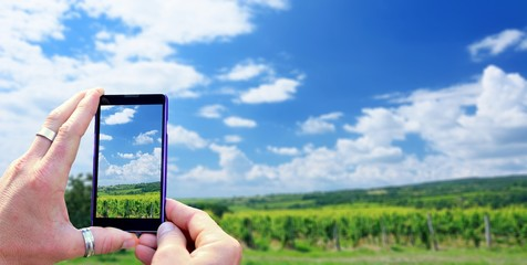 View over the mobile phone display during taking a picture of vineyard. Holding the mobile phone in hands and taking a photo. Focused on mobile phone screen.