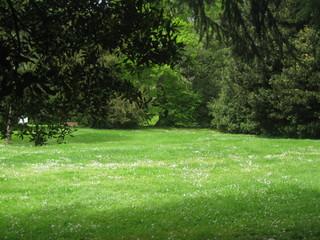 Staande foto Tuin green view