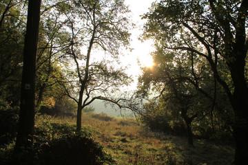 Wald mit Herbstsonne