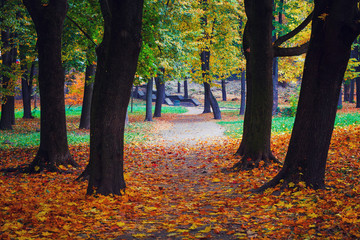 autumn leaves in a park on earth