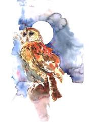 Owl. Сова