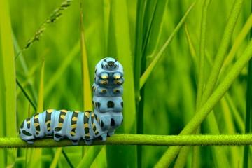 caterpillar 3D