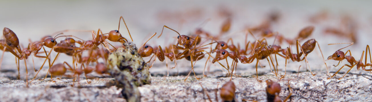 Portrait of the ants with bokeh background